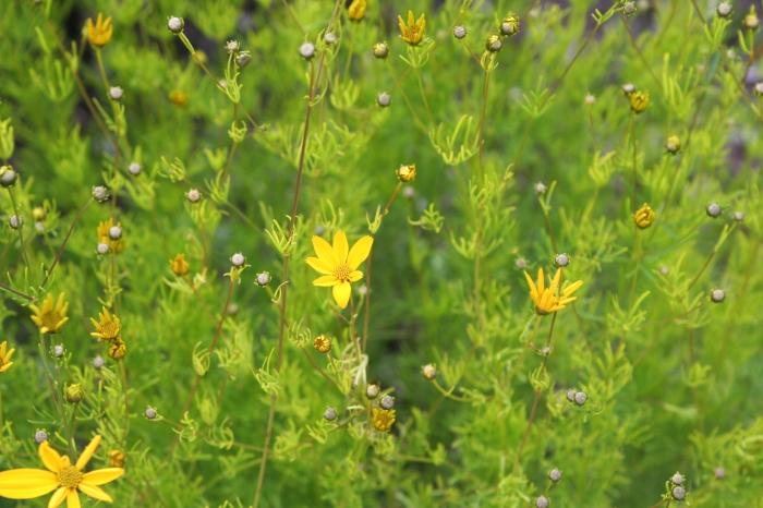 Midsummer Flowers by Anna Brones